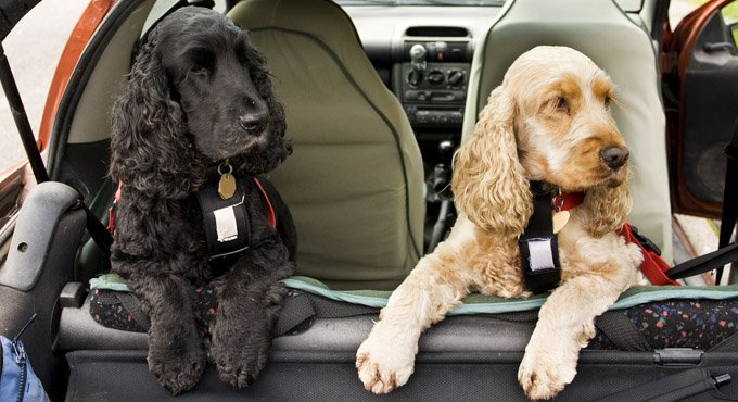 Best Dog Car Seats 2019 Keep Your Pet Safe While Traveling