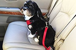 SOFI'S DOG CAR HARNESS + FREE Connector Strap