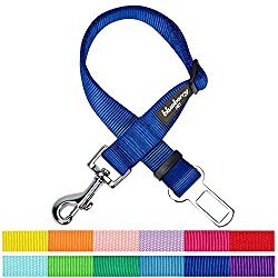 Blueberry Pet Dog Collars & Seat Belts