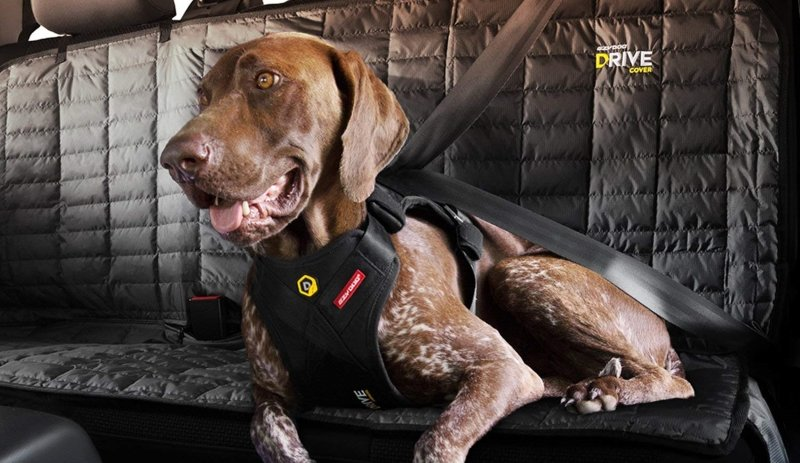 Excellent Crash-Tested Harness